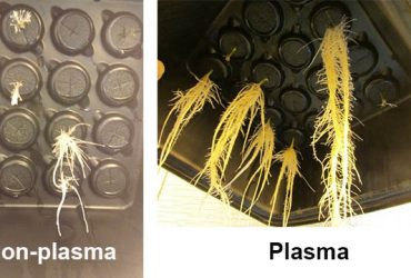 All About Innovation: Brown University Trial Shows Potential of Plasma-Treated Water to Aid Plant Growth